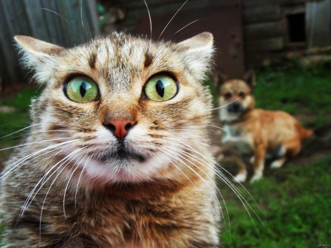 Картинки с испуганным котом