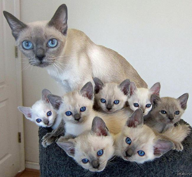 котики и котики фото