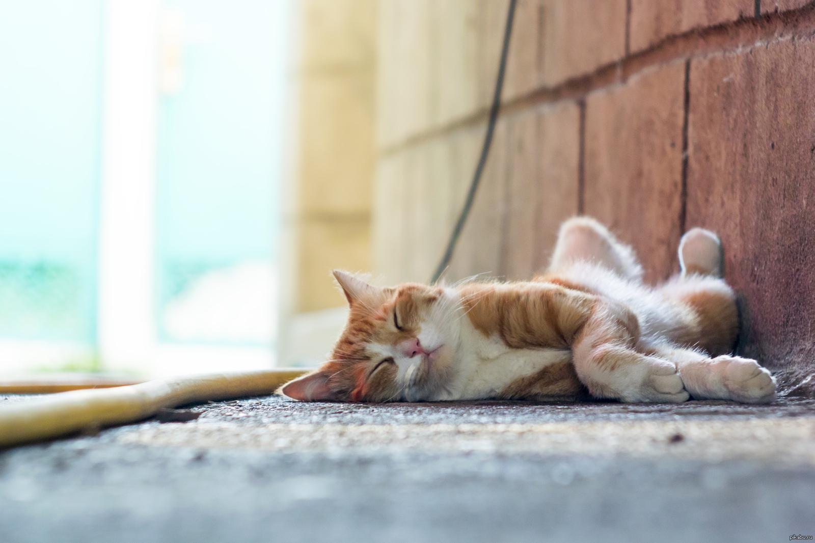 Сон звать кота