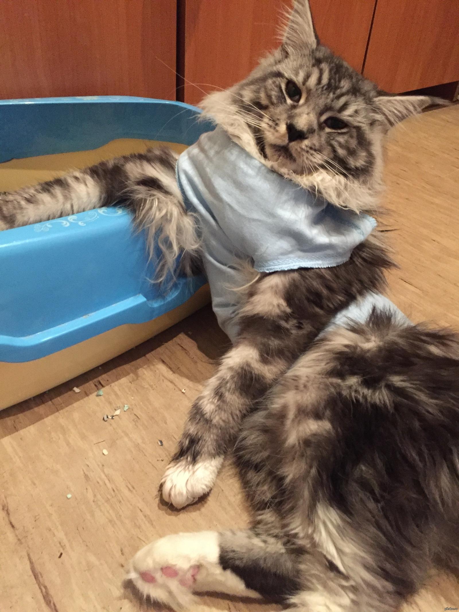 Кот после кастрации описался
