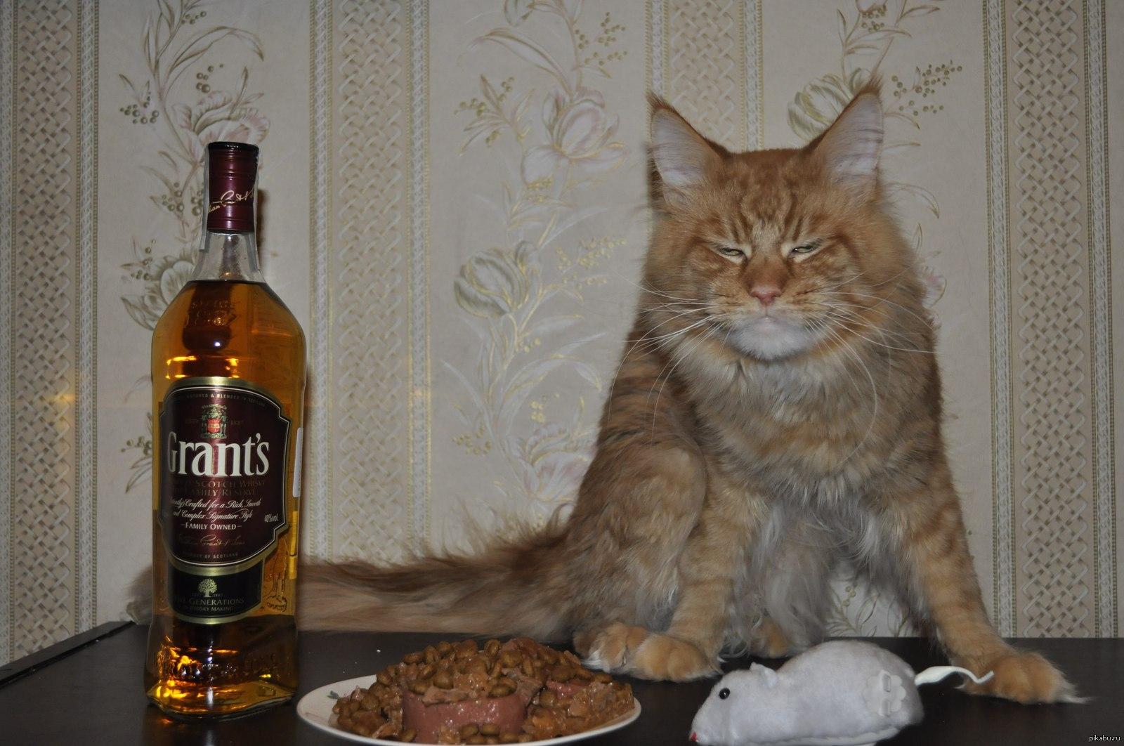 Картинки пьяный день рождения