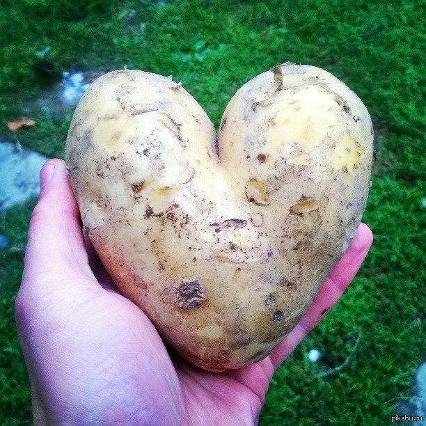 Смешная картинка про картошку