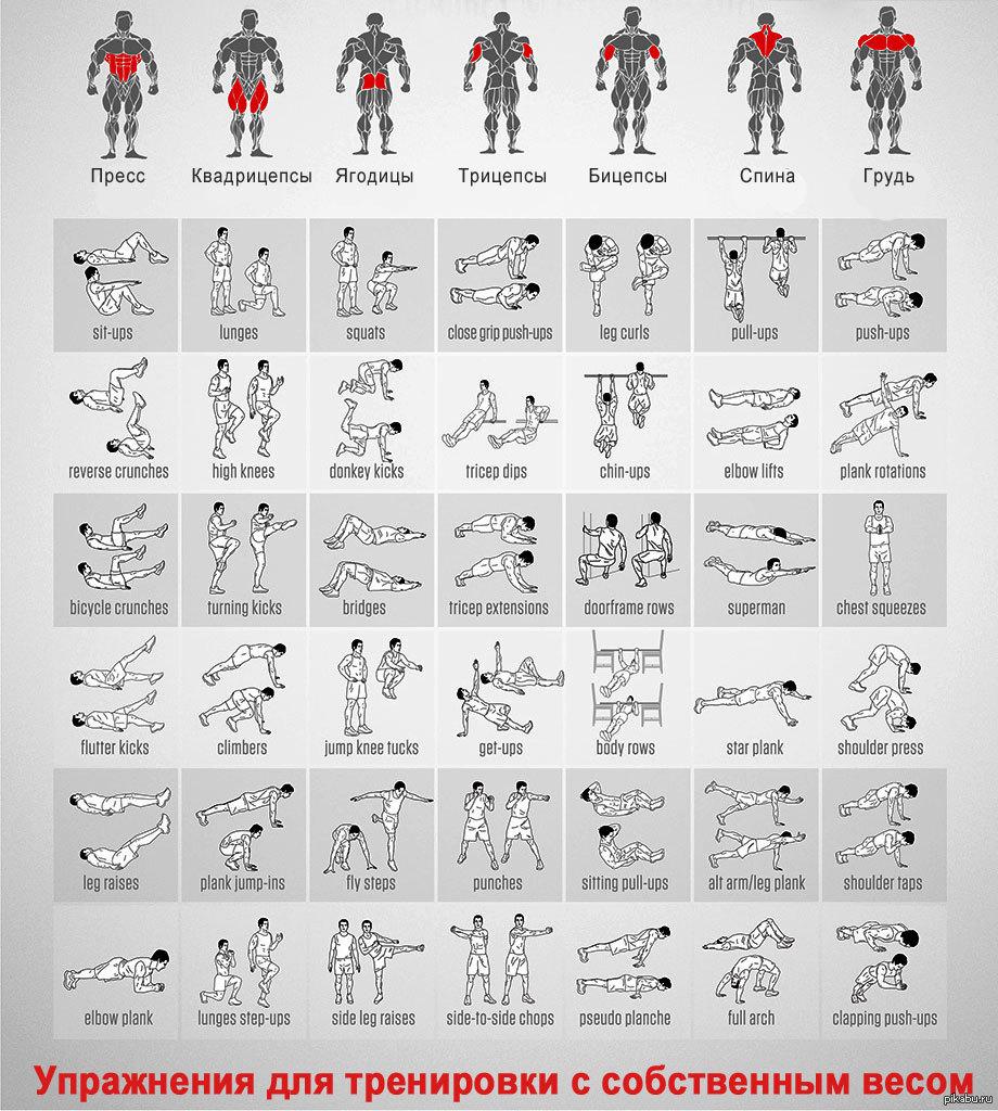 Упражнения для разных групп мышц в картинках