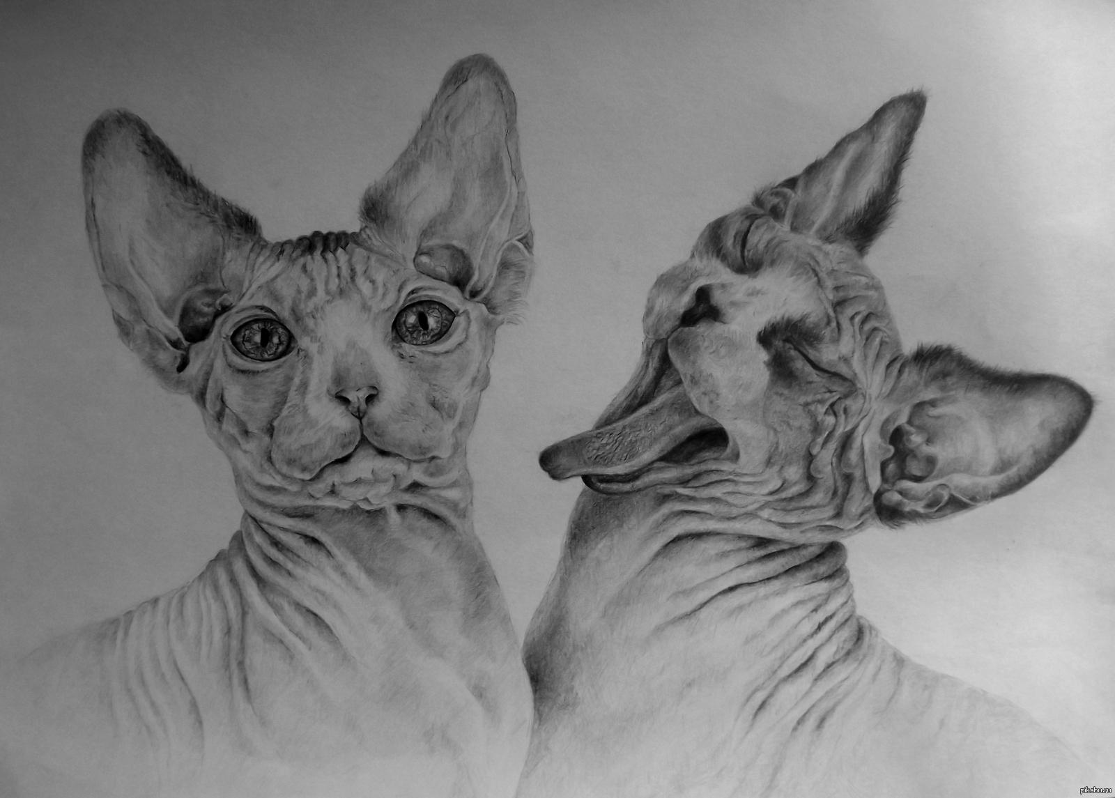 найти рисунки карандашом кошек фото того дома сборно