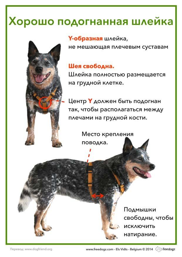 Очень зачем собаке амуниция кто его