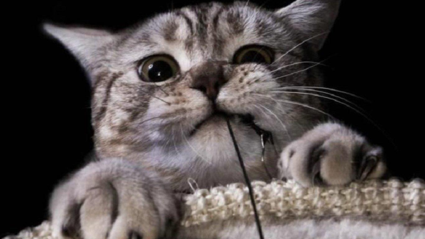 Смешные животные про котов
