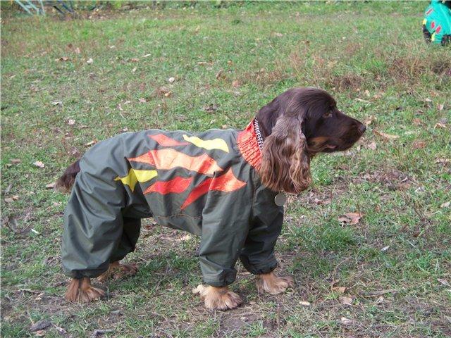 Одежда для собак scruffs