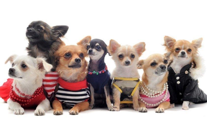 фото одежда для собак фото