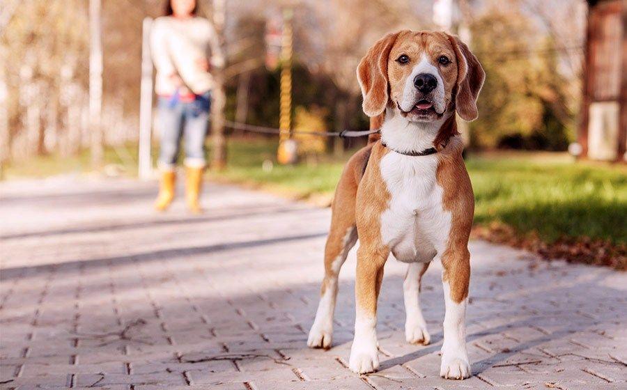 Воспитание собаки. Часть 2. | Пикабу