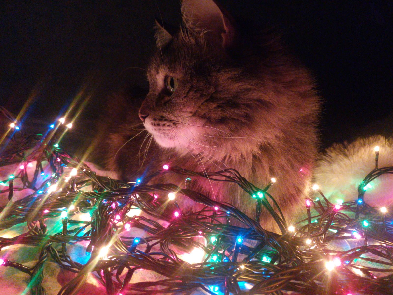 Кот в гирляндах