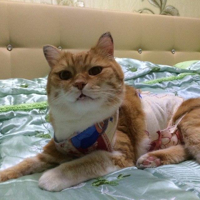 Коту сделали операцию на лапе