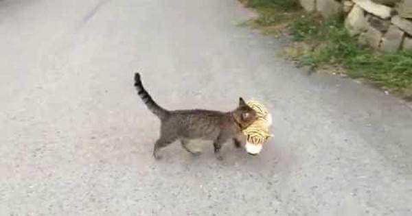 cat using litter kwitter